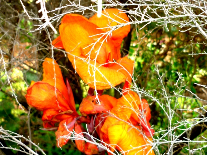 orange-b1